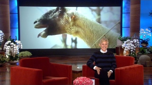 Watch The Ellen DeGeneres Show  Season  - Let It Goat Online