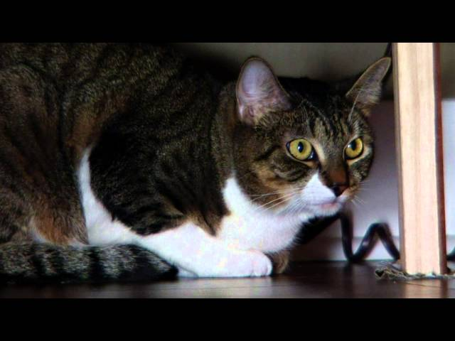 My Cat From Hell Full Episodes Free Online
